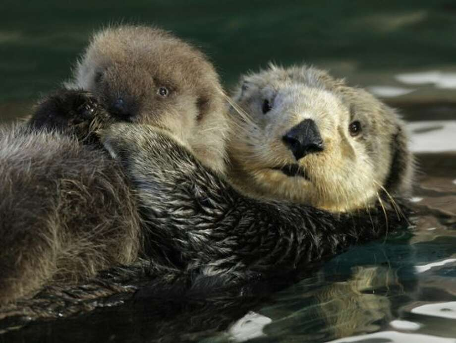 Go to the aquarium: The crowds ogling the baby otter will be smaller. Or hit the zoo. Or somplace like  that. Spend some quality time with your kids, or your significant other,  or your parents, or your grandparents.