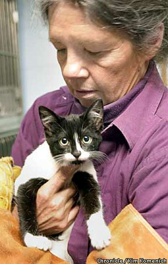 The Berkeley Animal Shelter needs volunteers for its feral cats program. Applicants should be thick of skin. Here, volunteer Susan Spiegel handles Domino, a cat that was sentenced to a short stay in the feral lodgings. Feral cats need lots of handling and human exposure before they can be adopted.  CHRONICLE PHOTO BY KIM KOMENICH Photo: KIM KOMENICH