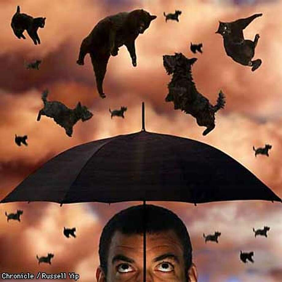 "This illustration titled, ""Raining Dogs and Cats,"" is for a Laura Evenson story on the number of books out about dogs and cats. PHOTO ILLUSTRATION BY RUSSELL YIP/THE CHRONICLE Photo: PHOTO ILLUSTRATION BYRUSSELL YIP"