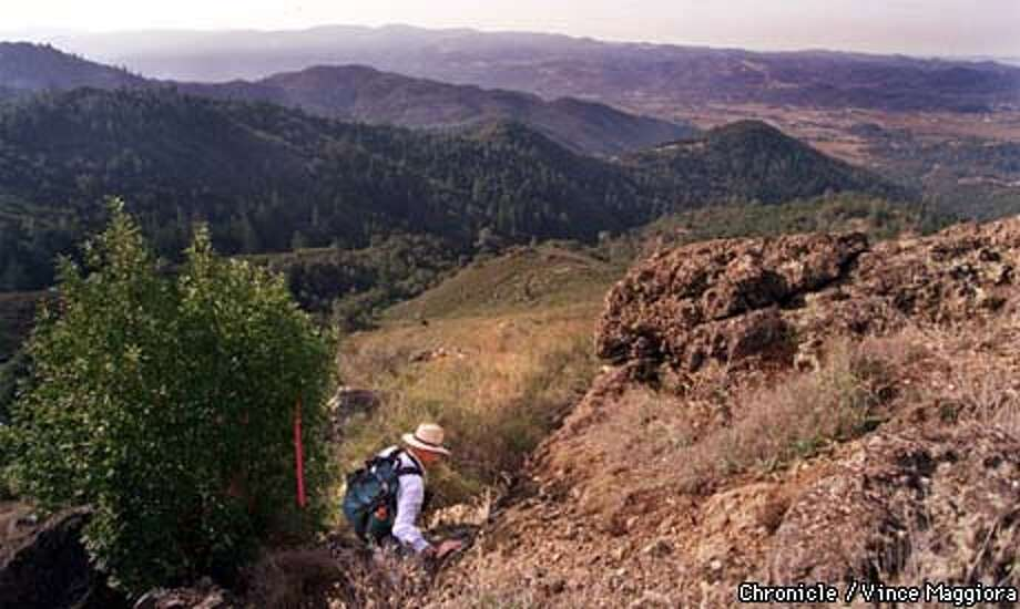 = Guy Kay hikeing on the 588 acre acquisition of the Palisades Trail out of Calistoga . by Vince Maggiora Photo: VINCE MAGGIORA