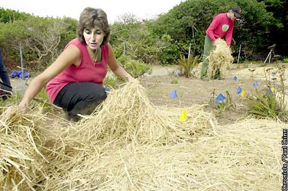 Project organizer Mary Petrilli (left) spread hay to control erosion at San Bruno Mountain Park.  PAUL CHINN/S.F. CHRONICLE Photo: PAUL CHINN