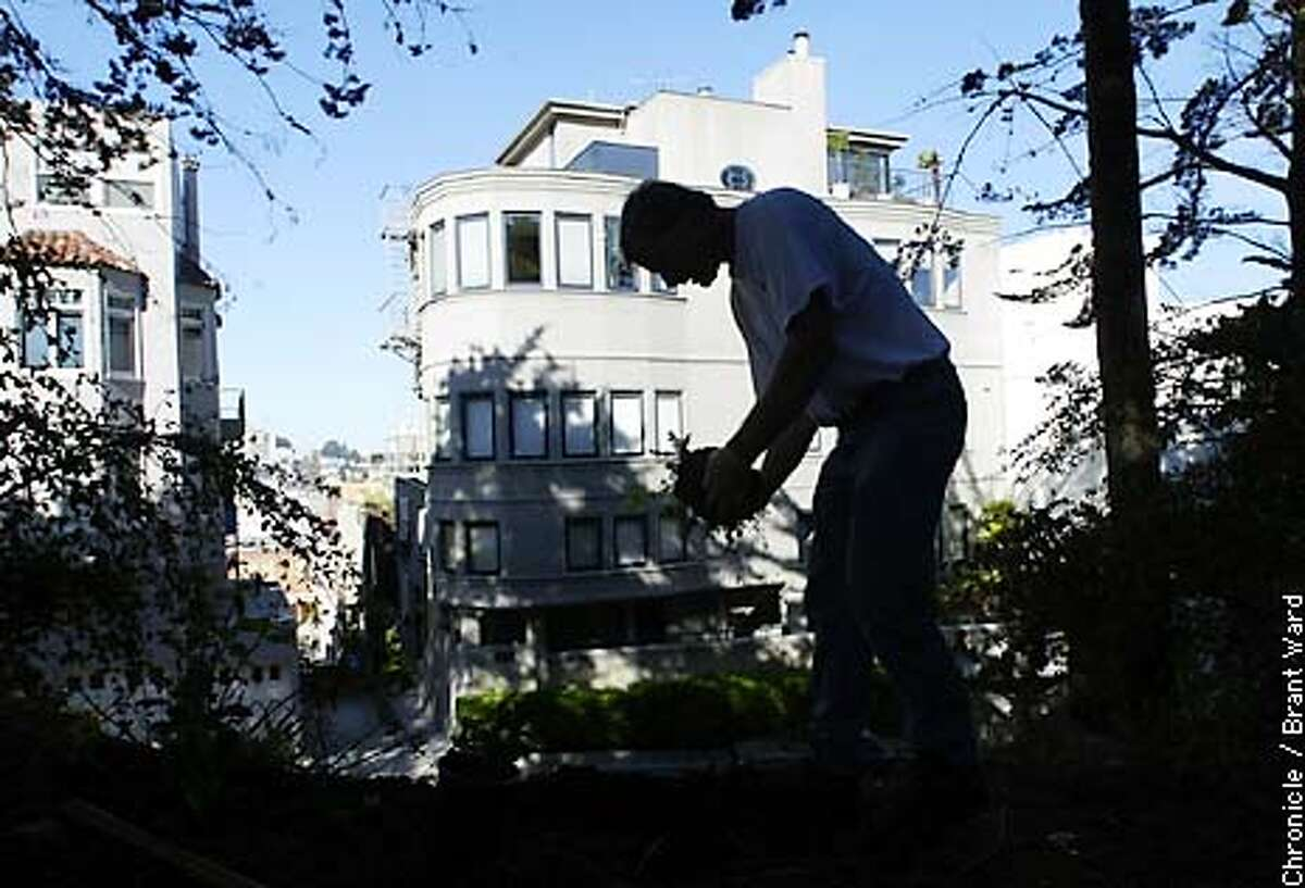 San Francisco's Neighborhood Parks Council is concerned over the very few gardeners left to take care of problems in the city's parks....here a gardener who works part-time at Coit Tower plants some new native plants on a slope. By Brant Ward/Chronicle
