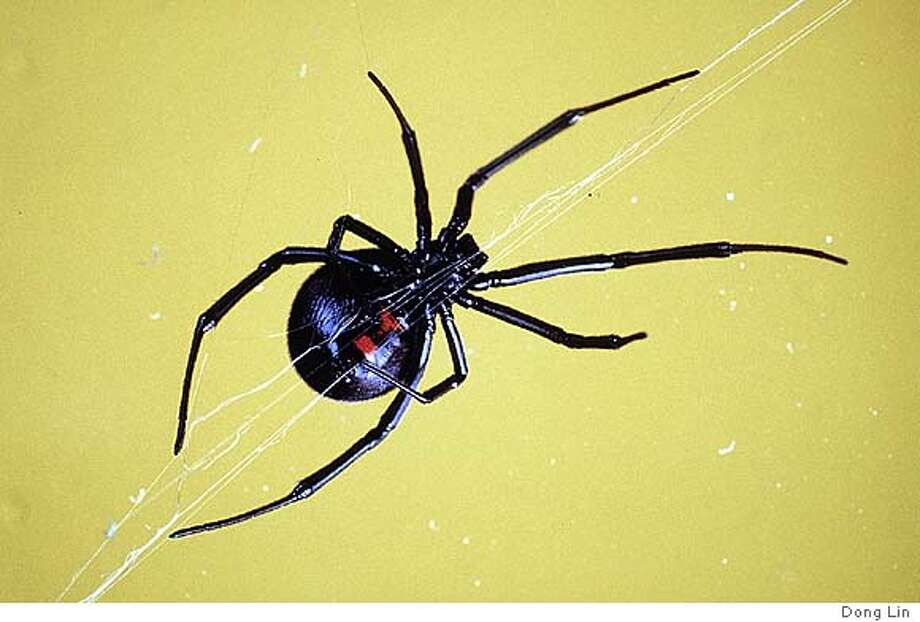 A Guide To Common Household Spiders / Scary Looking, Yes, But Most Would  Only Harm A Flea