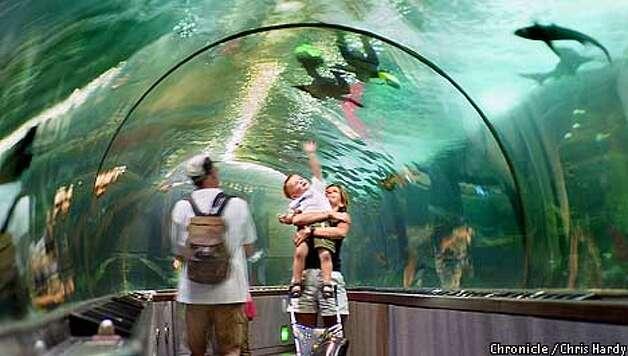Aquarium Rises From Depths Of Underwater World Sfgate