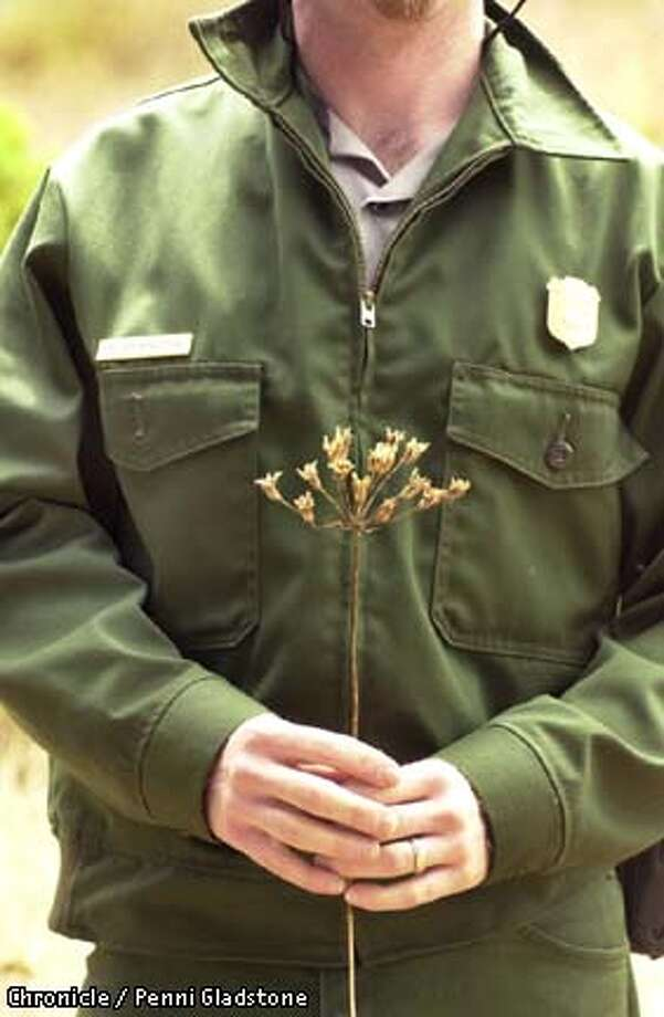 Peter Brastow, an ecological restoration coordinator with the National Park Service, holds a native flowering plant called the Ithuriel's Spear which grows in the Presidio. PENNI GLADSTONE/San Francisco Chronicle Photo: PENNI GLADSTONE