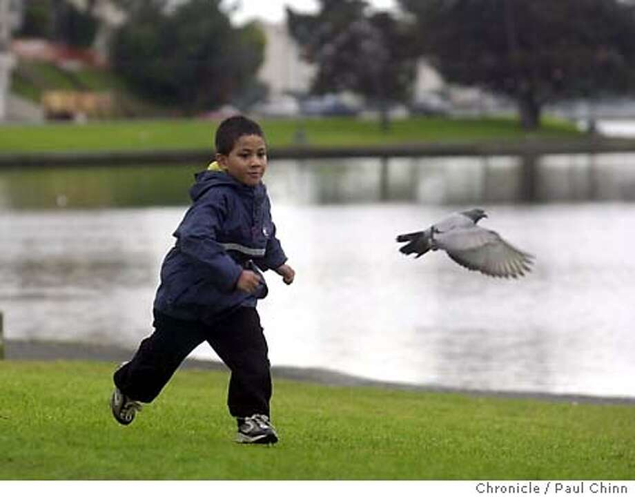 oakweather_004_pc.JPG Three-year-old Samasoni Utu tries to keep up with a pigeon during a break in Tuesday's rain storm at Lake Merritt in Oakland on 1/27/04. PAUL CHINN / The Chronicle Photo: PAUL CHINN