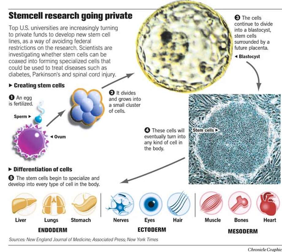 Stemcell Research Going Private. Chronicle Graphic Photo: John Blanchard