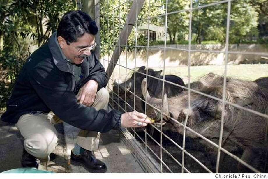 mollinedo_036_pc.JPG Manuel Mollinedo feeds treats to Tibbets the warthog - his favorite animal species - on a walking tour of the zoo. New San Francisco Zoo director Manuel Mollinedo on 3/2/04 in San Francisco. PAUL CHINN / The Chronicle MANDATORY CREDIT FOR PHOTOG AND SF CHRONICLE/ -MAGS OUT Manuel Mollinedo, the new director of the San Francisco Zoo, feeds 9-year-old Tibbetts the warthog. Mollinedo is partial to warthogs. ProductNameChronicle Photo: PAUL CHINN