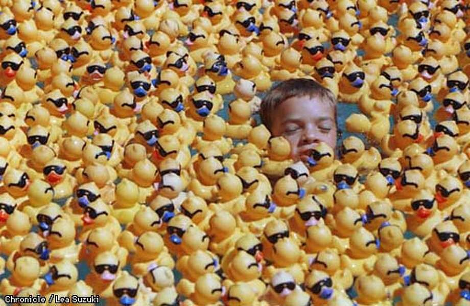 Shane Bennett, 9, of Berkeley swims with 20,000 ducks in the Pamp's swimming pool where volunteers prepared the duck for the annual Rubber Ducky Derby fundraiser for Children's Hospital. Photo By Lea Suzuki