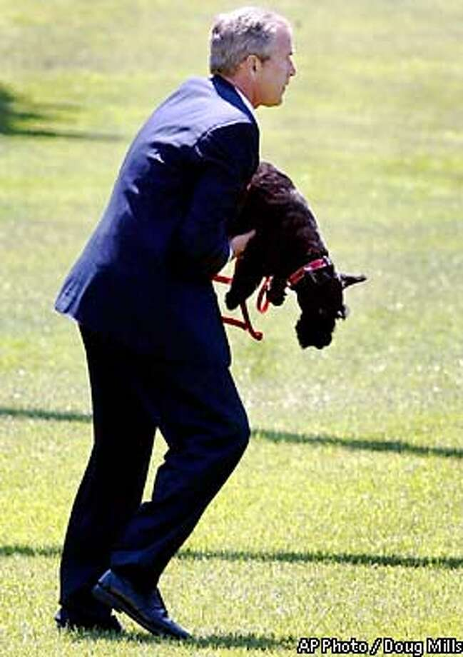 President Bush picks up his dog Barney as they board Marine One at the White House for his trip to Crawford, Texas, where he'll vacation, Tuesday, Aug. 6, 2002. President Bush declared himself ``feeling good'' after his annual medical checkup. The exam was Bush's first regular checkup since last August (AP Photo/Doug Mills) Photo: DOUG MILLS