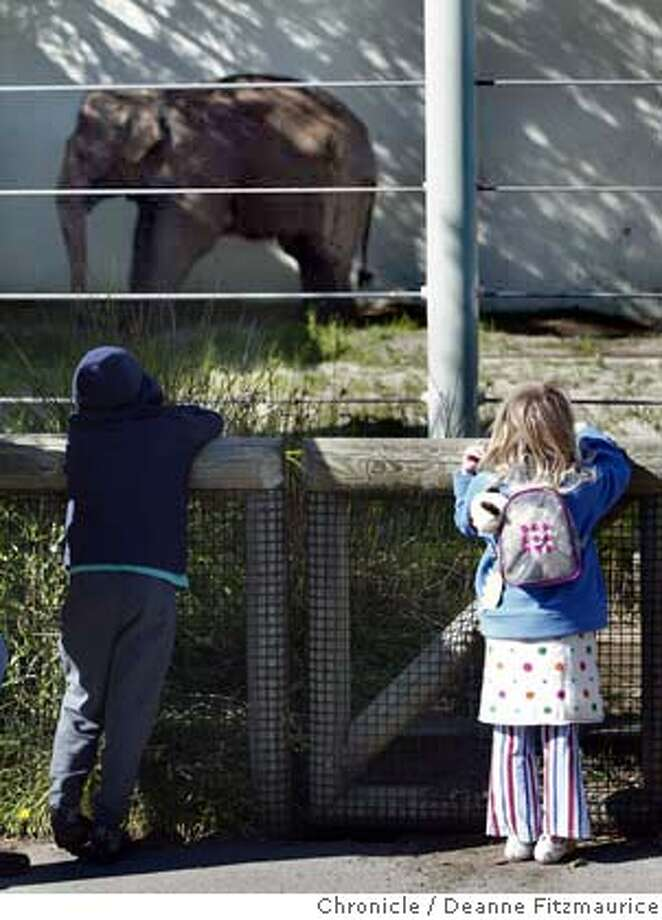 (l to r) Chandler Thistle, 8, and his sister, Chloe, 4 from SF look at Calle who stands against a wall for support. Calle, the elephant at San Francisco Zoo will be put to sleep soon. She is ailing from a hip problem and tuberculosis.  Deanne Fitzmaurice / The Chronicle Photo: Deanne Fitzmaurice