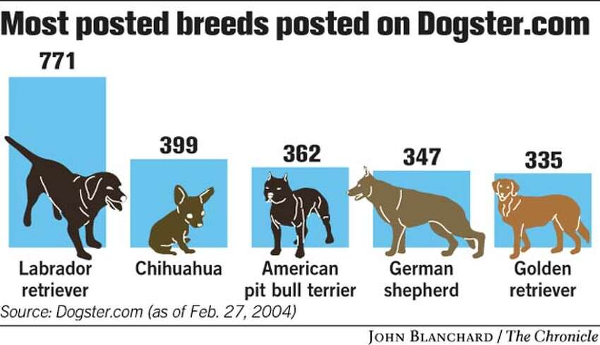 Breeds Most Posted on Dogster.com. Chronicle graphic by John Blanchard