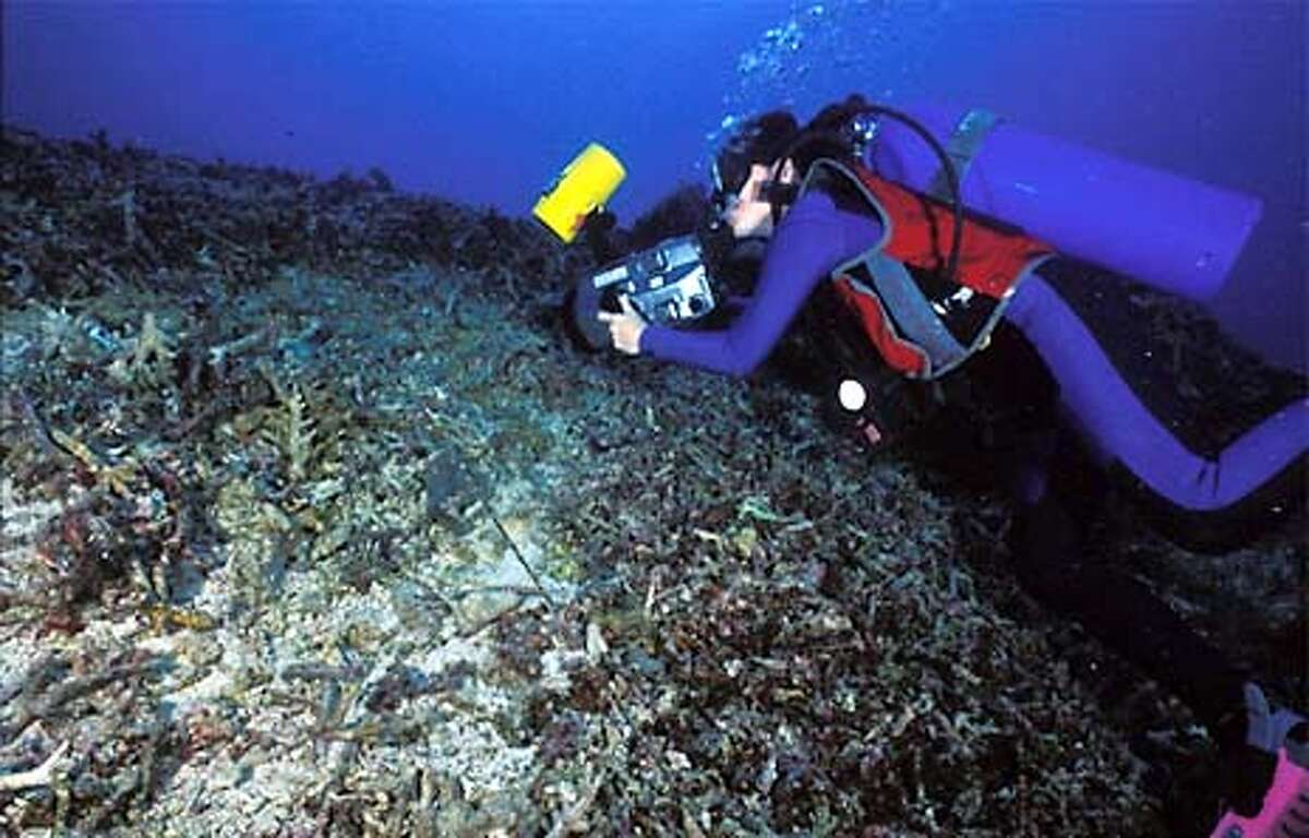 Dynamited reefs in the Sulu Sea.