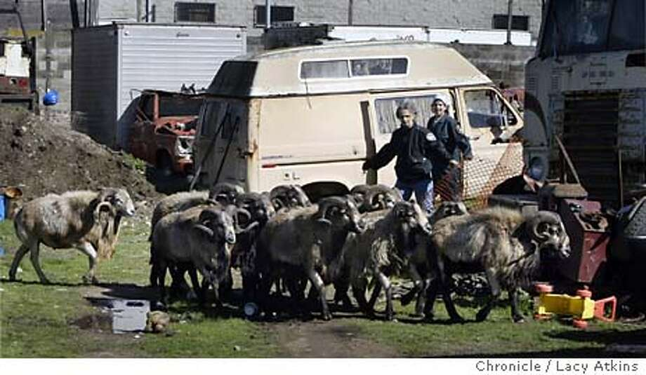 Kat Brown of the San Francisco Animal Control , front, herds the thirteen sheep through a salvage yard in the Bayview as they rescue them, Wed. Feb.18, 2004, in San Francsico.  13Sheep are rescued from a salvage yard in the bayview, Wed. Feb. 18, 2004, in San Francisco.  Chronicle photos by Lacy Atkins Photo: LACY ATKINS