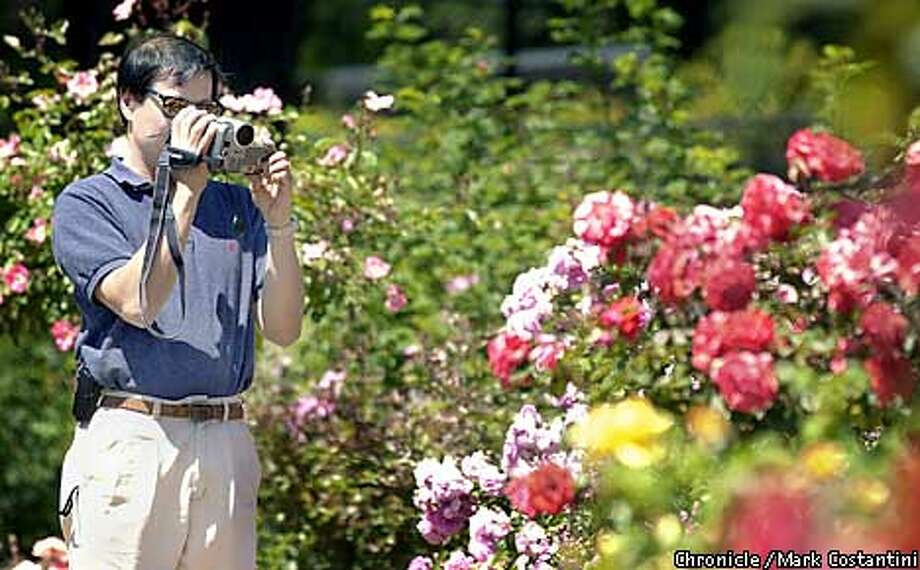 SOME DAYS ARE JUST SO BEAUTIFUL YOU JUST NEED TO STOP AND DIGITALLY VIDEOTAPE THE ROSES. AT THE BERKELEY ROSE GARDEN, CLEMENT LEE OF SAN JOSE DOES JUST THAT. PHOTO: MARK COSTANTINI/S.F. CHRONICLE Photo: MARK COSTANTINI