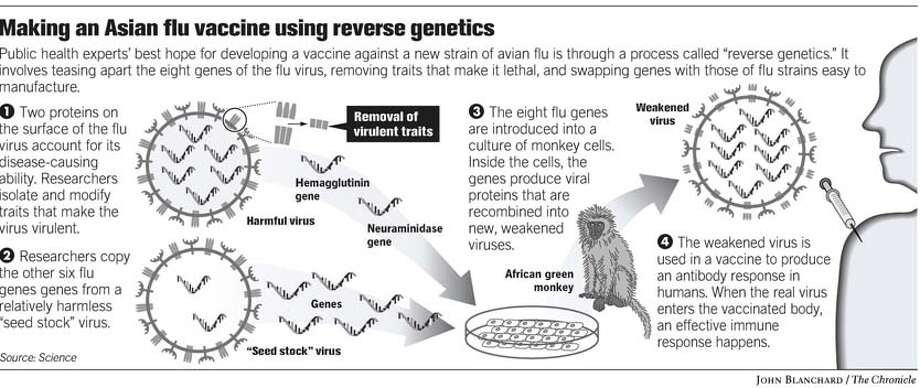 Reverse Genetics. Chronicle graphic by John Blanchard