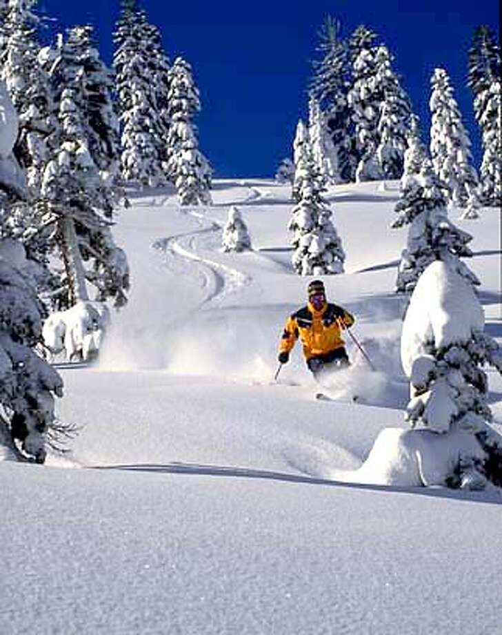 a skier finds boards that float and carve powder on a slope at Bear Valley winter Resort.  photo courtesy Bear Valley Resort.