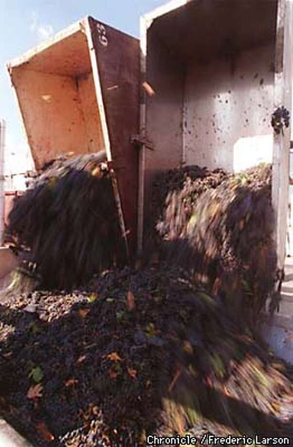 HARVEST 1/C/12SEP97/BU/FL--Grapes are dumped into crushers at Beringer Winery in St. Helena. With the biggest harvest in 5 years, wineries are getting picky about accepting grapes after years of accepting almost anything. PHOTO BY FREDERIC LARSON