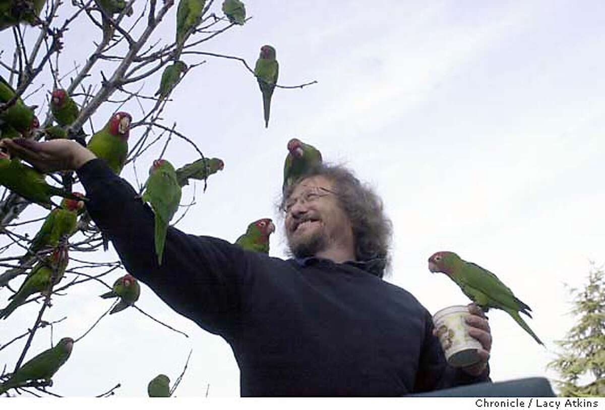 """PARROTS_067_.jpg Mark Bittner, known as the """"Birdman"""", feeds hundreds of wild parrots from his shillside porch along Telegraph Hill in San Francisco, JANUARY13, 2004. Lacy Atkins / The Chronicle"""