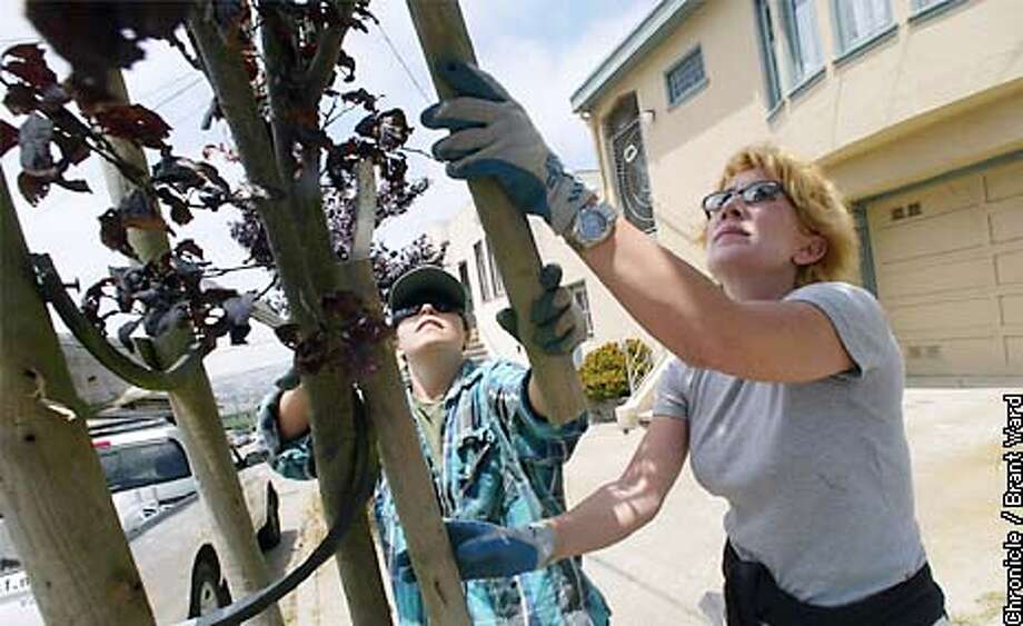 """Ellen Shea, left, of Friends of the Urban Forest, and Lisa Amoroso, a volunteer, remove a stake on a plum tree off Persia Street in San Francisco. Shea and Amoroso are doing their """"treeage"""" duties to revisit trees planted years ago and make sure they are healthy. By Brant Ward/Chronicle Photo: BRANT WARD"""