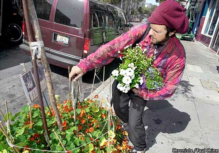 James Beckett rearranged a floral display on Haight St. Beckett has been planting flowers in the tree boxes which line Haight St. for the past four years.  PAUL CHINN/S.F. CHRONICLE Photo: PAUL CHINN