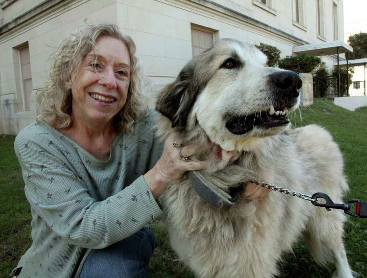 Kate Cordts' dog Rowdy has been doing well after receiving an experimental cancer treatment.