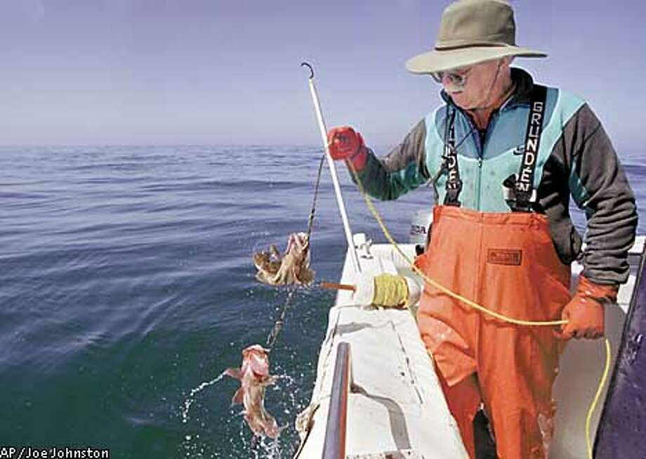 ** FILE ** Fisherman Jerry Jones pulls in a rockfish he caught near San Luis Obispo, Calif., June 5, 2001. Jones sells his fish live to buyers who in turn sell to restaurants in Los Angeles. With new scientific assessments showing some Pacific groundfish even worse off than feared, fisheries managers fear legal requirements to rebuild populations could shut down many sport and commercial fishermen on the West Coast, from Mexico to Canada. (AP Photo/The Tribune Joe Johnston, File) Photo: JOE JOHNSTON