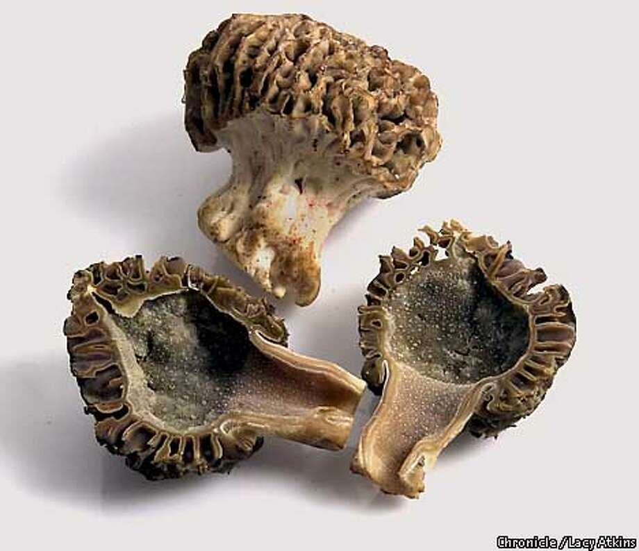 Morels, along with their close cousins, truffles, are the aristocrats of the fungus world. Chronicle photo by Lacy Atkins