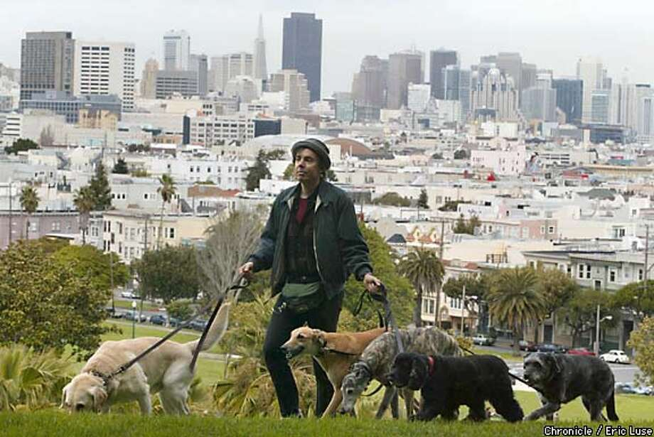 Park pack: Musician and professional dog walker Ira Marlowe takes client dogs Murphy, Otis, Bongo, Bart and Bella for their daily outing in San Francisco's Dolores Park. Chronicle photo by Eric Luse