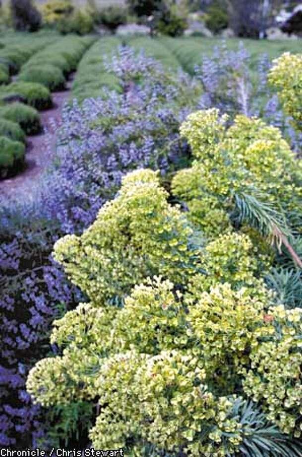 The Matanzas Creek Estate Gardens at Matanzas Creek Winery, 6097 Bennett Valley Road, Santa Rosa. NOTE: NO GARDENER WAS AVAILABLE TO HELP IDENTIFY PLANTS. GARY RATWAY IS THE GARDEN DESIGNER. 707-937-1130. BY CHRIS STEWART/THE CHRONICLE Photo: CHRIS STEWART