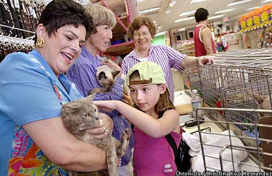 CHRISTINA KOCI HERNANDEZ/CHRONICLE  (L to R) Linda Triglia, Helen Gough and Carol Harkin, of Community Concern for Cats, show a kitten to a curious 7 year-old, Jade Marasco, of Walnut Creek. Community Concern for Cats, a cat rescue organization, sets-up an adoption booth at Pet Food Express in walnut Creek. Photo: CHRISTINA KOCI HERNANDEZ