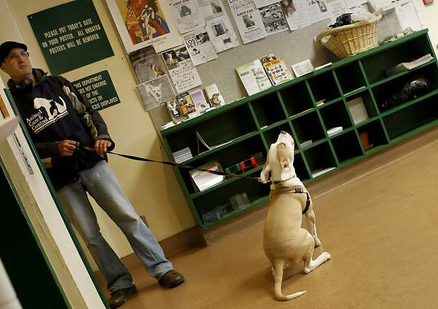 A volunteer dog walker pauses in the lobby of the SF Care and Control facility as his dog pauses to howl. Animal rights advocates are upset over a provision in Gov. Brown's California budget proposal that would roll back protections for shelter animals. In San Francisco, officials at the city Animal Care and Control are still planning to keep lost and adoptable animals as long as possible. Photo: Brant Ward, The Chronicle