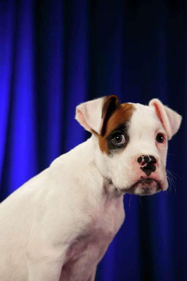 Hunter: Boxer Photo: Kim Holcombe, Animal Planet / Animal Planet