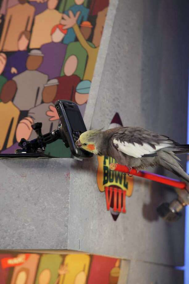 Tweeting during the game. Photo: Kim Holcombe., Animal Planet / Discovery Communications