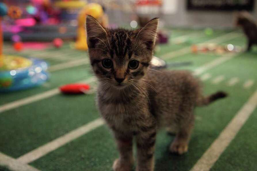A kitten plays during Kitty Half-time.