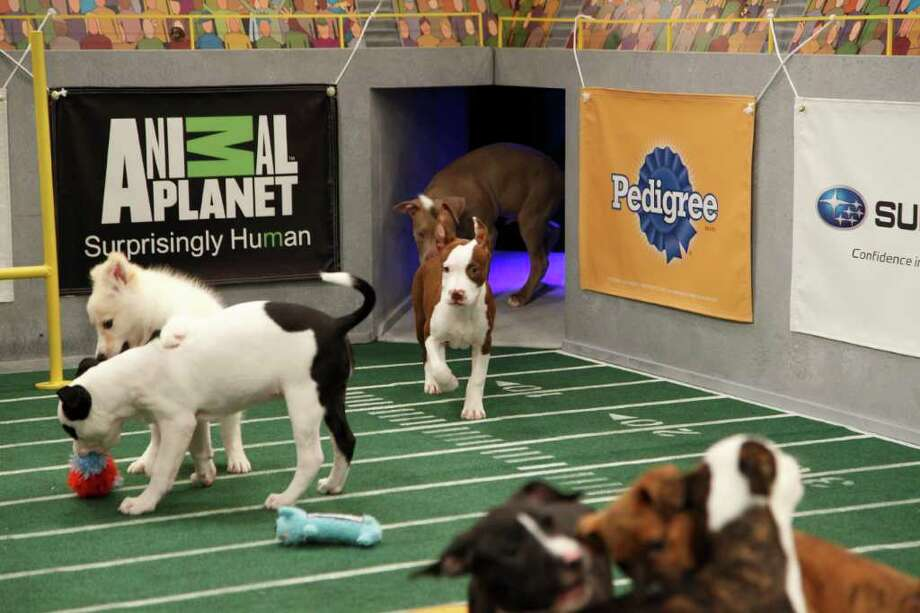 The pups at play. Photo: Kim Holcombe., Animal Planet / Discovery Communications