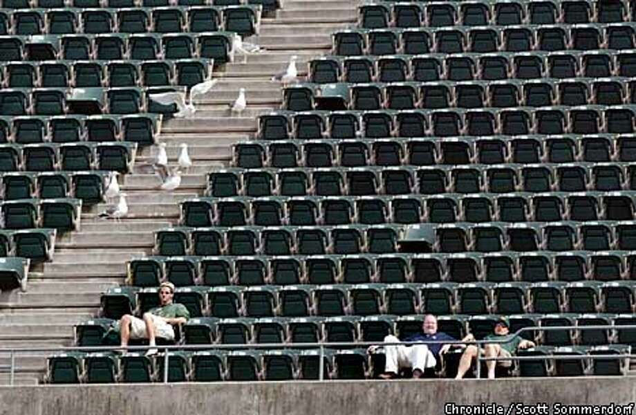 Near the end of the A's dismal 11-4 loss to the Toronto Blue Jays, some A's fans in the stadium were outnumbered by this group of seagulls. Perhaps they were Blue Jay fans. (SF CHRONICLE PHOTO BY SCOTT SOMMERDORF) Photo: SCOTT SOMMERDORF