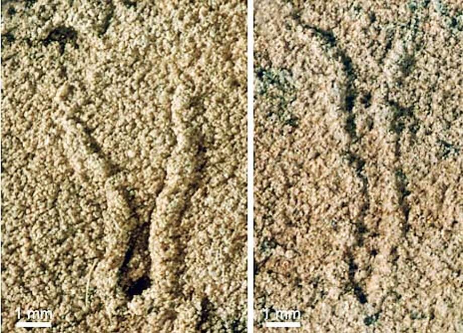 Close-up images of the 1.2 billion-year old tidal sandstones with trace-like fossils. HANDOUT FROM SCIENCE ONLINE.