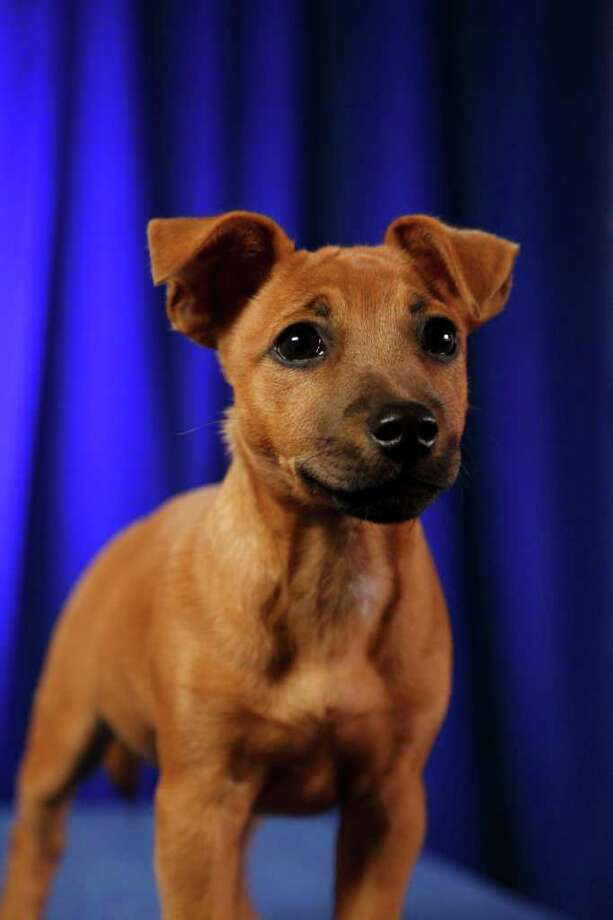 Baskin: Jack Russell/Pug Mix Photo: Kim Holcomb, Animal Planet / Animal Planet