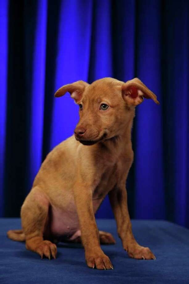 Marbles: Terrier Photo: Kim Holcomb, Animal Planet / Animal Planet
