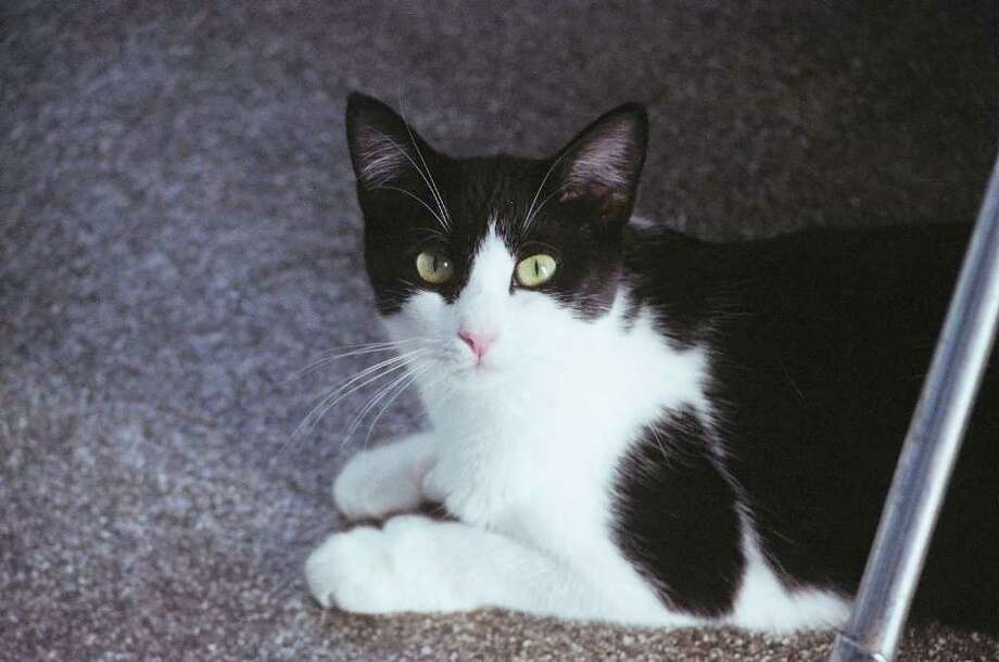 Strays and Others will host an adoption event this month in Norwalk. Photo: Contributed Photo