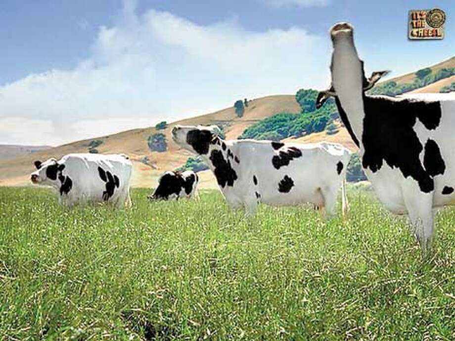 "Cows sing happy songs like ""Sunshine Day"" in the TV commercials. Courtesy of California Milk Advisory Board"