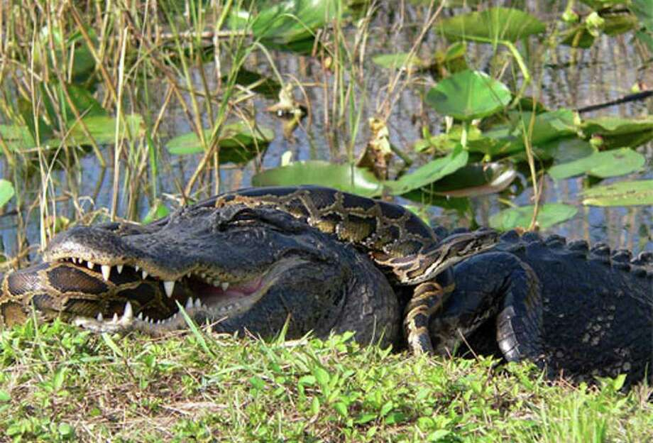 If you miss the Everglades  ... Photo: National Park Service, Associated Press
