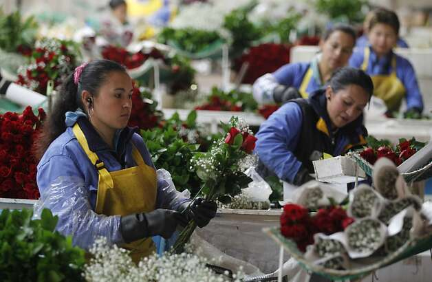 Workers pack roses to be shipped to the US ahead of Valentine's Day, the biggest holiday of the year for fresh-cut flower sales at the Mongibello flower company in Chia, north of Bogota, Colombia, Monday, Jan. 30, 2012. According to statistics from the Society of American Florists more than 80 percent of the roses bought in the US for this holiday come mainly from Colombia and Ecuador. (AP Photo/Fernando Vergara) Photo: Fernando Vergara, Associated Press