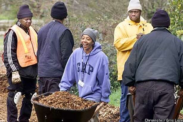Marquiza Turner hauls away a load of compost material as part of a job training program organized by the city and Strybing Arboretum. She and her co workers are working in the garden of Strybing Arboretum in San Francisco. BY ERIC LUSE/THE CHRONICLE