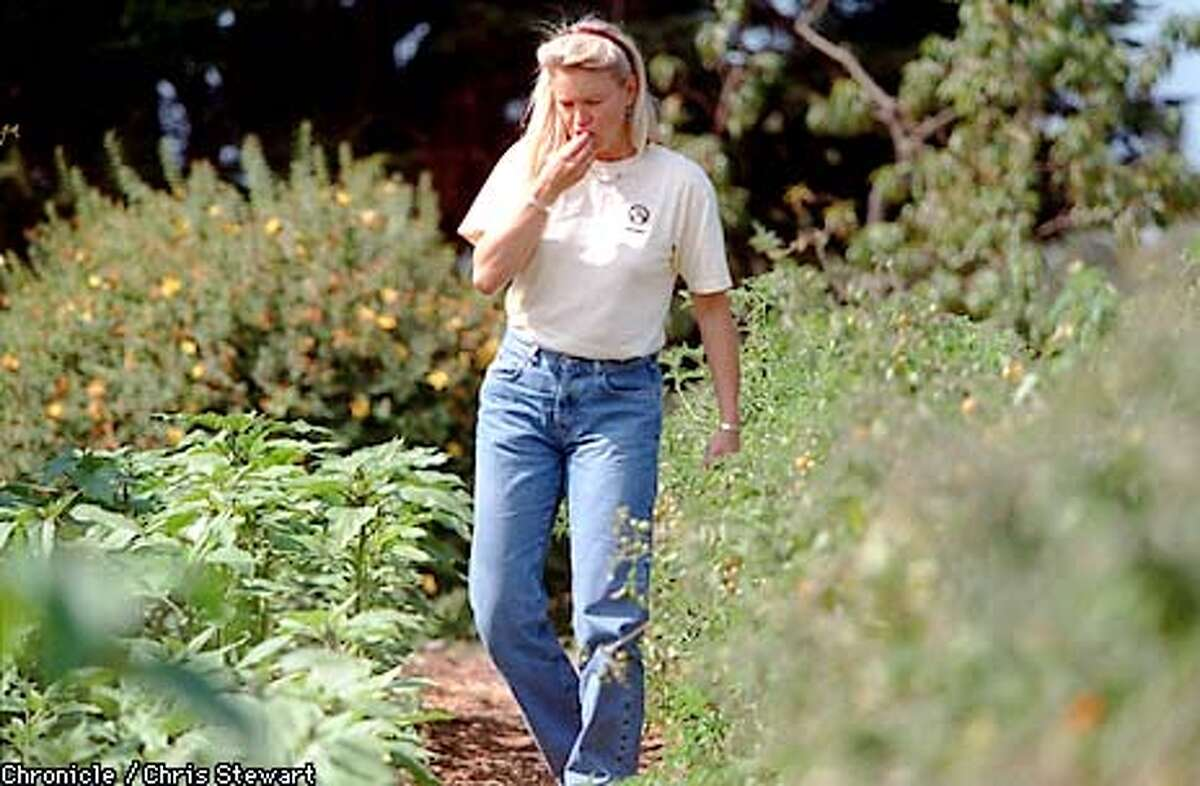 Nell Newman samples a tomato while walking through the UC Santa Cruz Farm and Garden Project which is funded by Newman's Own Organics, . PHOTO BY CHRIS STEWART/THE CHRONICLE