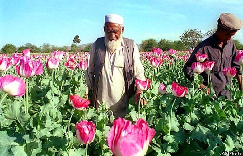 Afghan men walk through a poppy field in the Nangharhar province of Afghanistan in this March 1999 photo. Officials fear that Afghan opium traders are flooding the markets in order to make quick money ahead of a feared U.S. retaliatory strike on the country harboring Osama bin Laden. The sell-off following the Sept. 11 terror attacks has partly led to a sharp decrease in the price of opium in Afghanistan, the world's leading supplier. But lower prices have yet to be felt on the streets of Europe were most of the opium ends up, law enforcement officials say. (AP Photo)