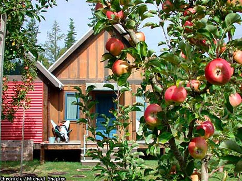 An apple tree dripping with lustrous fruits stands in front of one of the stand-alone cabins at the Apple Farm Inn near Philo.  with ANDERSON VALLEY  Michael Shapiro, one-time use.