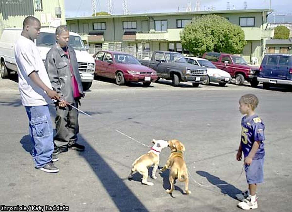 Photo by Katy Raddatz--The Chronicle Jamal Modica and his pit bull JB go around the Bayview Hunter's Point projects educating residents about the breed, discouraging backyard breeding and fighting, encouraging obedience training and good health. SHOWN: Left is Michael Johnson with his pit bull