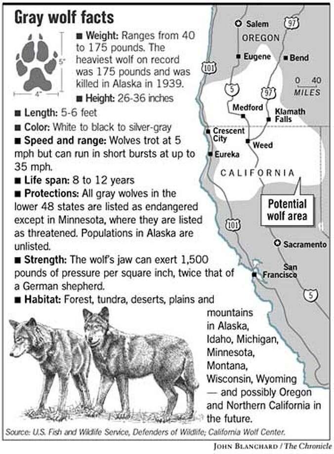 Wolves Fact Sheet For Kids